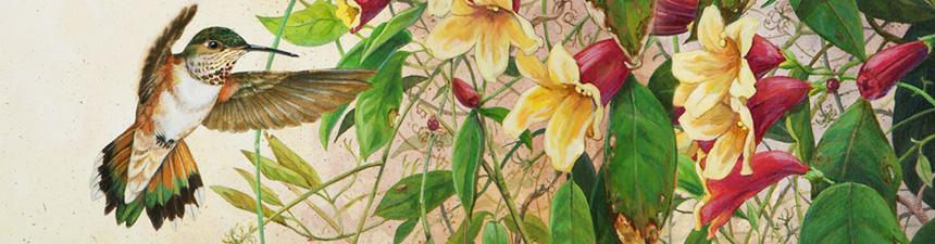 LHB_header_banners_hummingbird