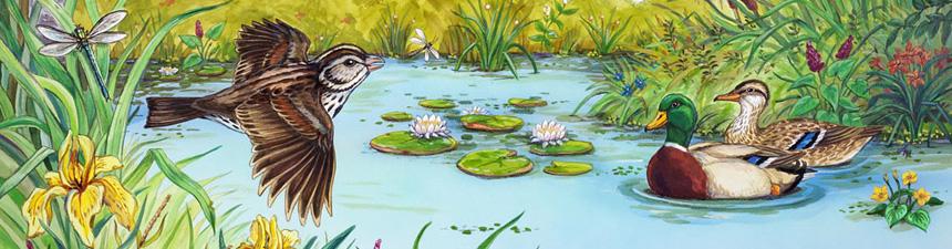LHB_header_wetlands