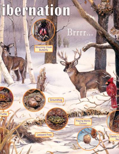 Audubon Hibernation